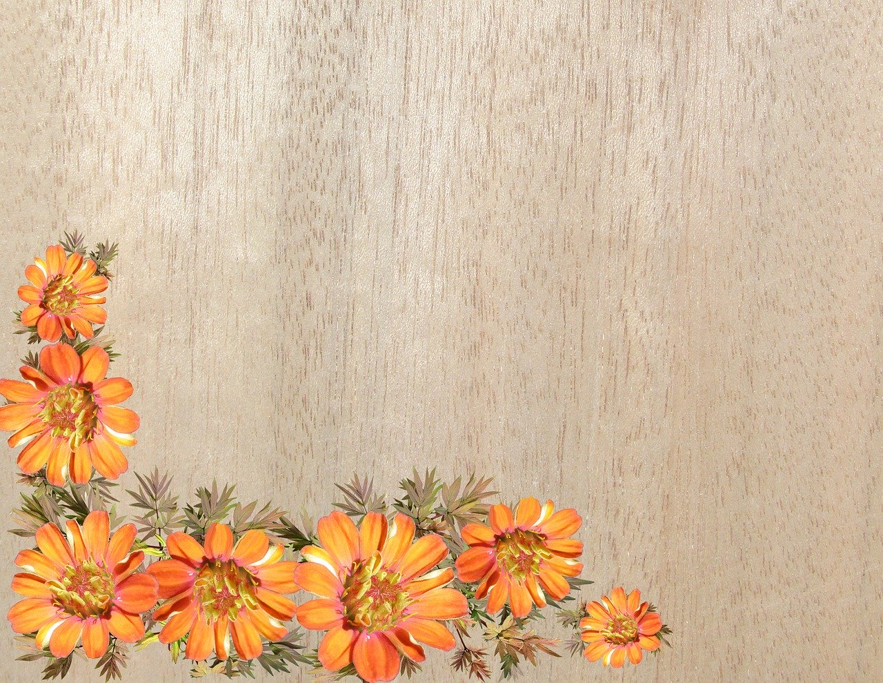 flower-3312438_1280