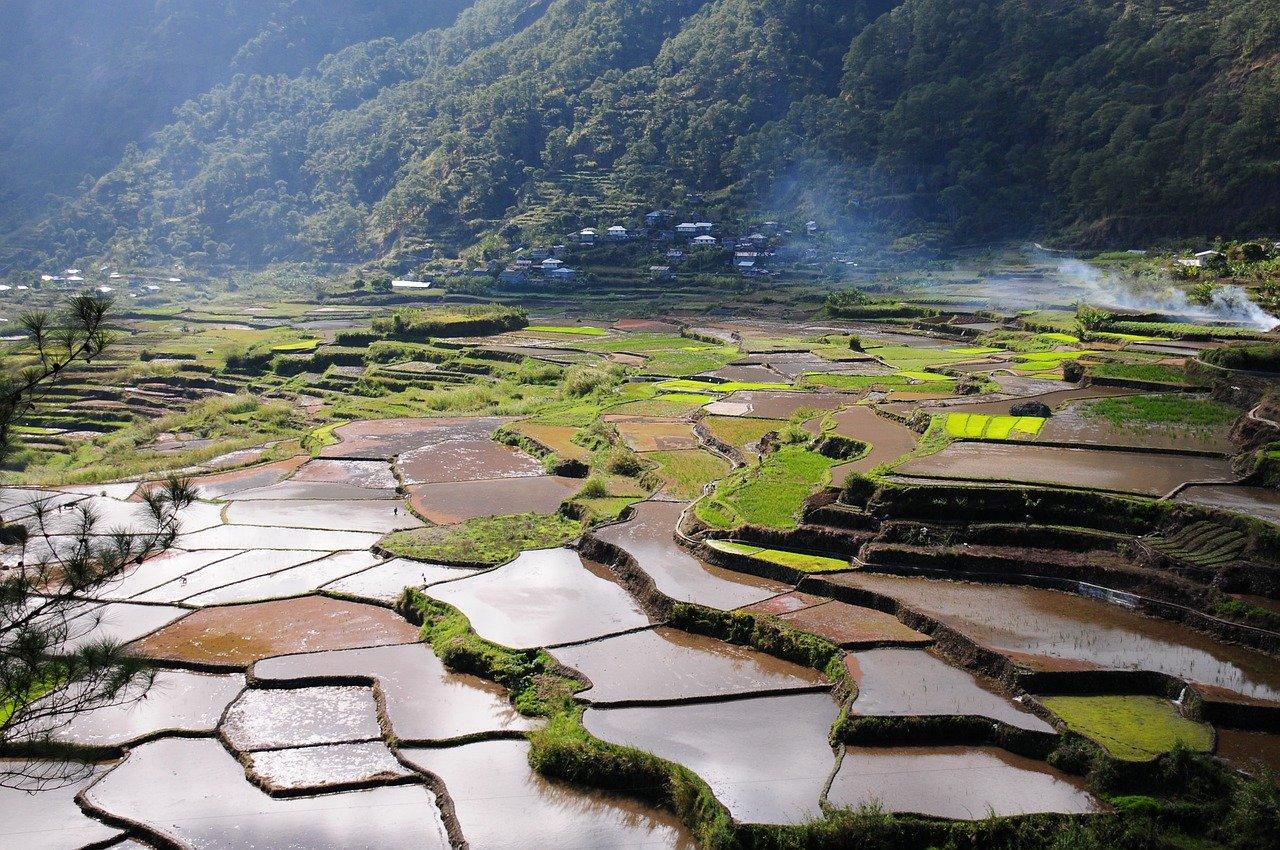 rice-field-5530707_1280